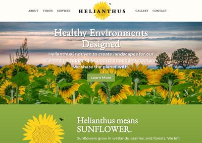 Helianthus